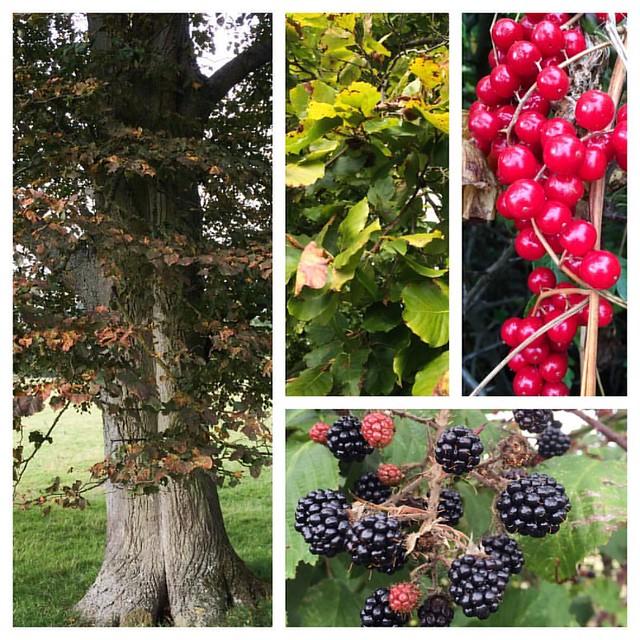 Autumn colours #oftheday #dogwalkingduty