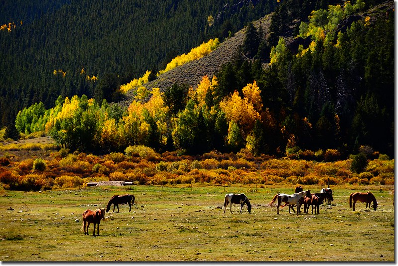 The pasture along Guanella Pass 1