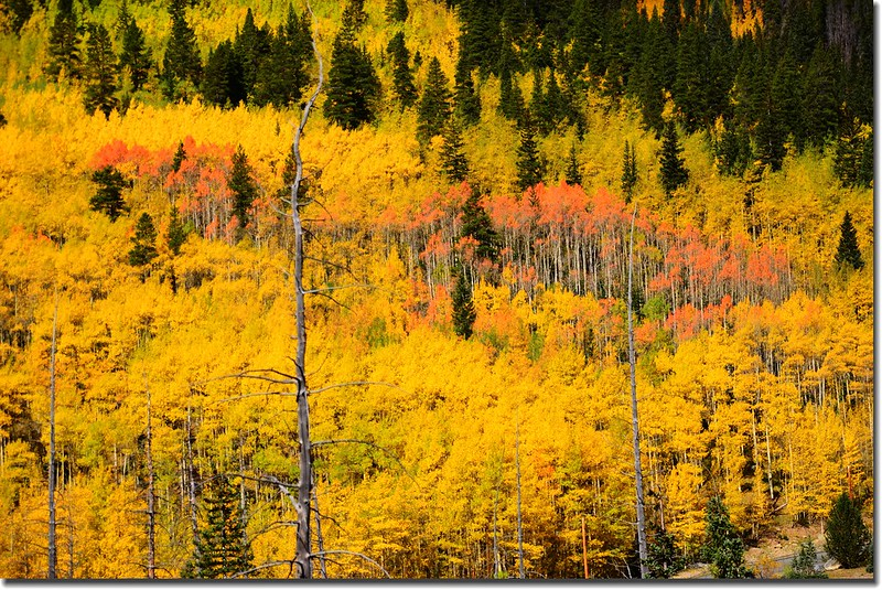 Fall colors, Guanella Pass, Colorado (7)