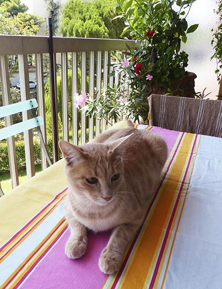 bounty sur la table du petit déj