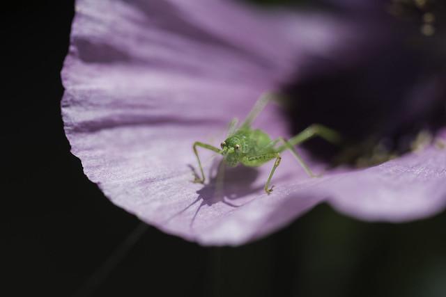 Sur Une Fleur (3), Nikon D7100, AF Micro-Nikkor 60mm f/2.8D