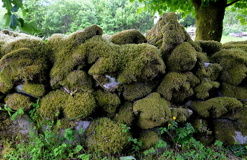 Mossy Dry Stone Wall