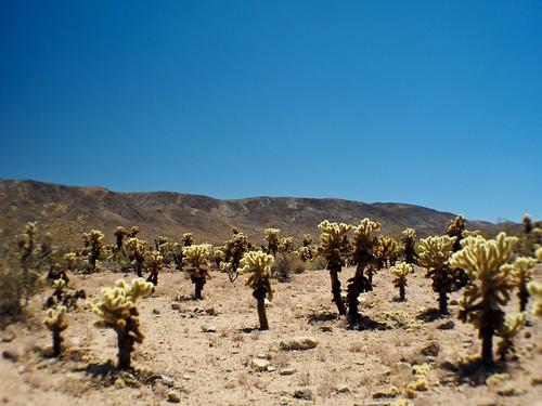 Cactus Garden - lensbaby effects