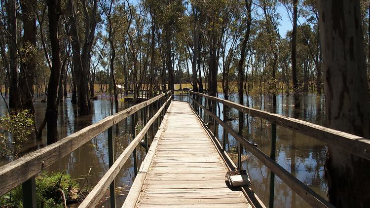 Boardwalk to Gulpa Creek Reed Beds Bird Hide, Murray Valley National Park, New South Wales