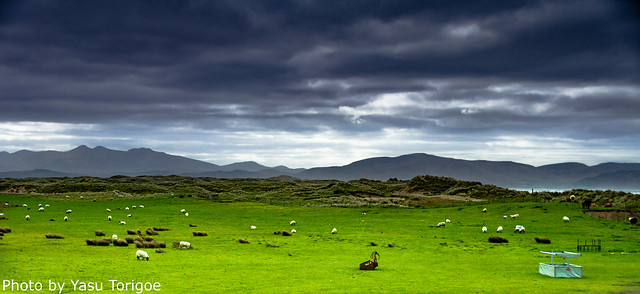 Dingle Peninsula Ireland-6