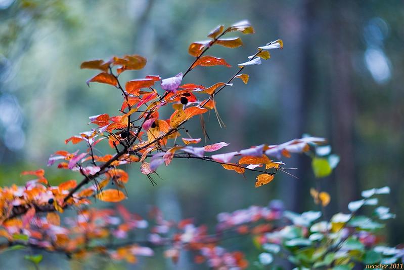mid_fall