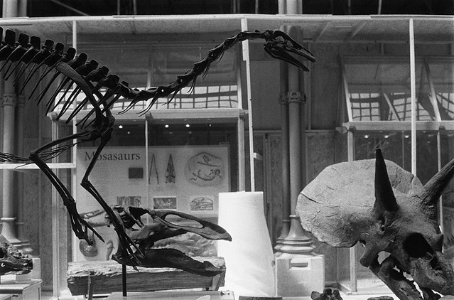 Natural History Museum Oxford, In Progress