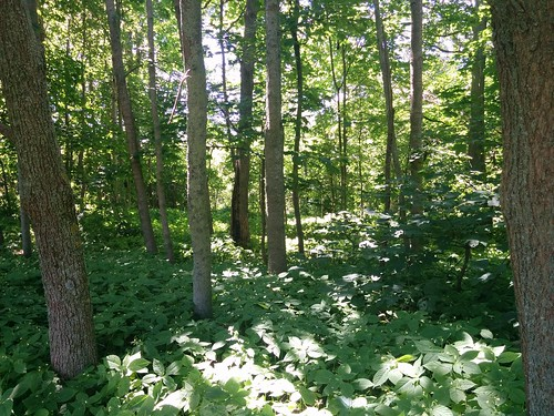 Garden of Fanningbank #pei #princeedwardisland (8) #charlottetown #fanningbank #garden #victoriapark