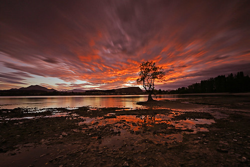 fierysoul wanakatree wanaka lakewanaka southisland newzealand nz sunrise landscape longexposure 30seconds canon5dmarkiii ef1635mmf28liiusm travel lifeng