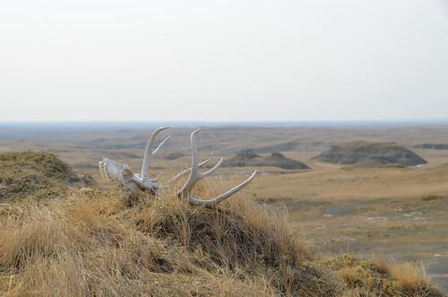 Grasslands East block hoodoo skull