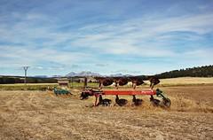 Countryside Landscape near Palencia #1