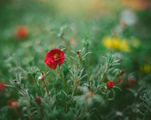 The sense of flowers