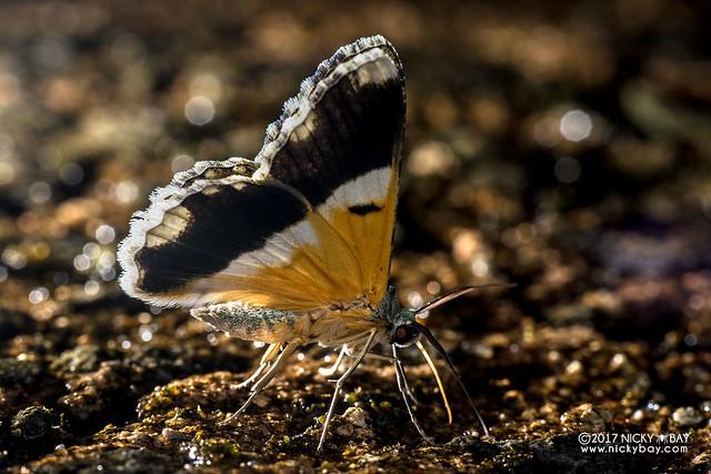 Butterfly - DSC_8045