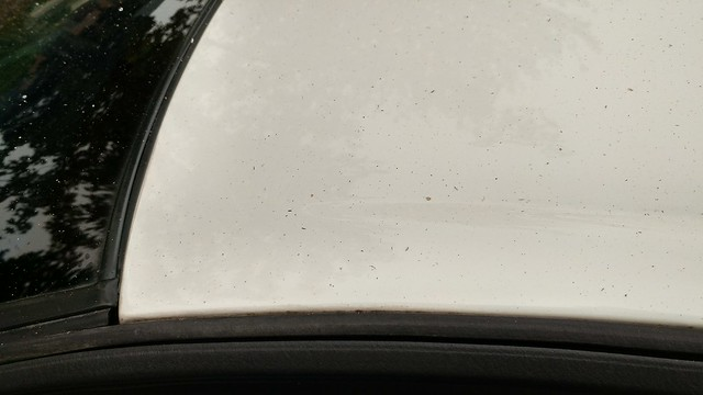 Ash on my car