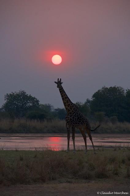 IMGP1976 Sunset at South Luangwa N.P. Zambia