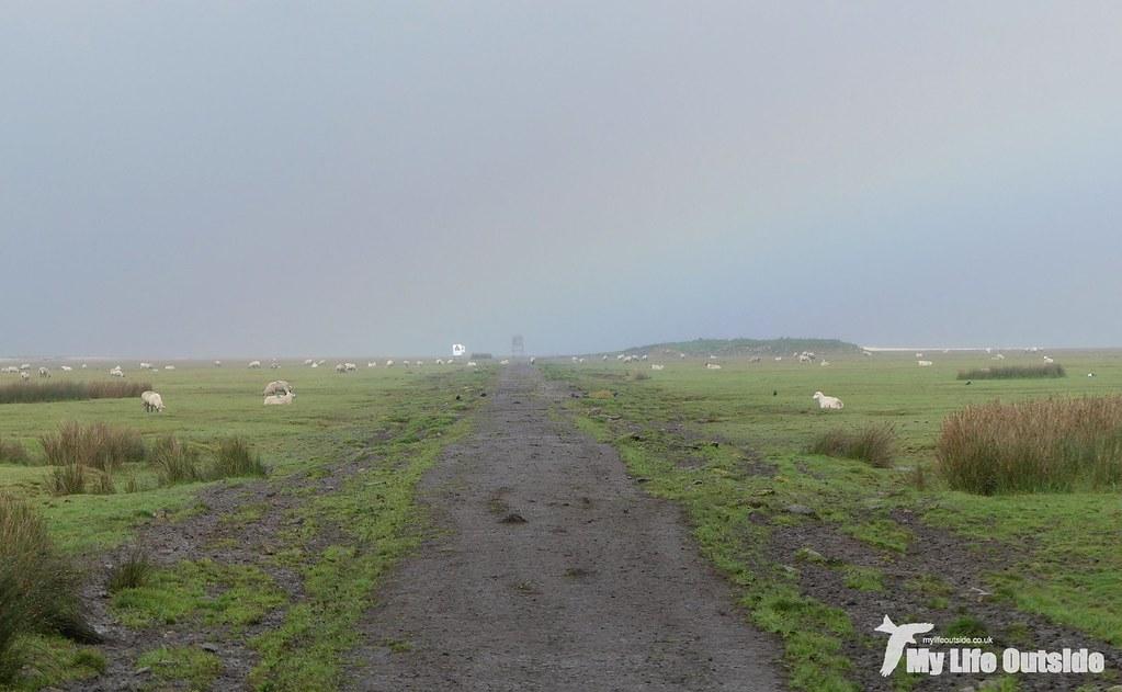 P1120397 - Causeway, Llanrhidian Marsh