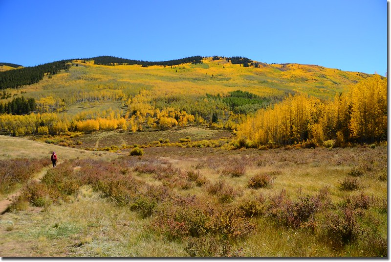 Fall colors, Kenosha Pass  (12)