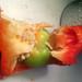20170213 - pregnant pepper - 201702132029-15