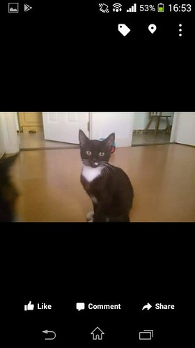 [See Comments Below] Wed, Aug 23rd, 2017 Lost Male Cat - Main Street, Dunleer, Louth
