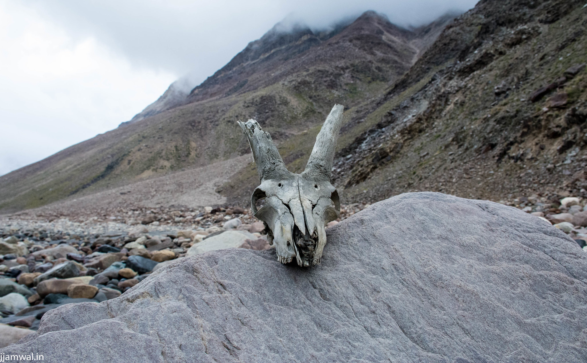 I just placed this skull on this rock to take the picture.