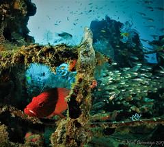 HUNTING ON THE WRECK_
