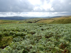 Above Torver, 7th August, 2017-001