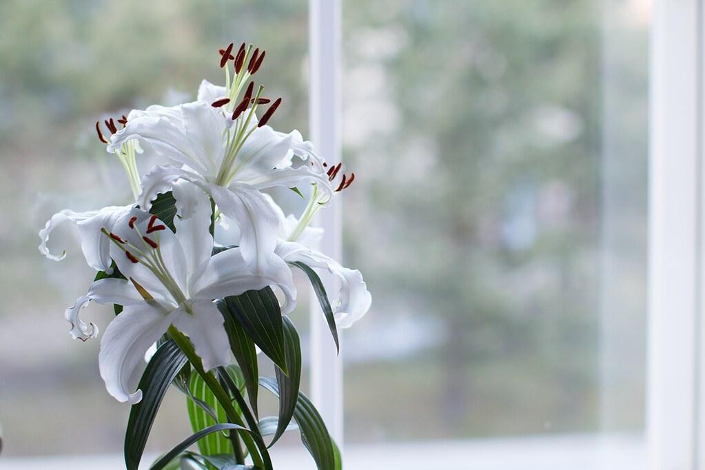 kukkia0