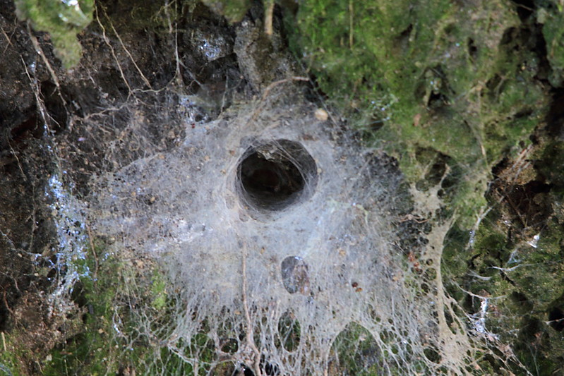 Spider's Hole