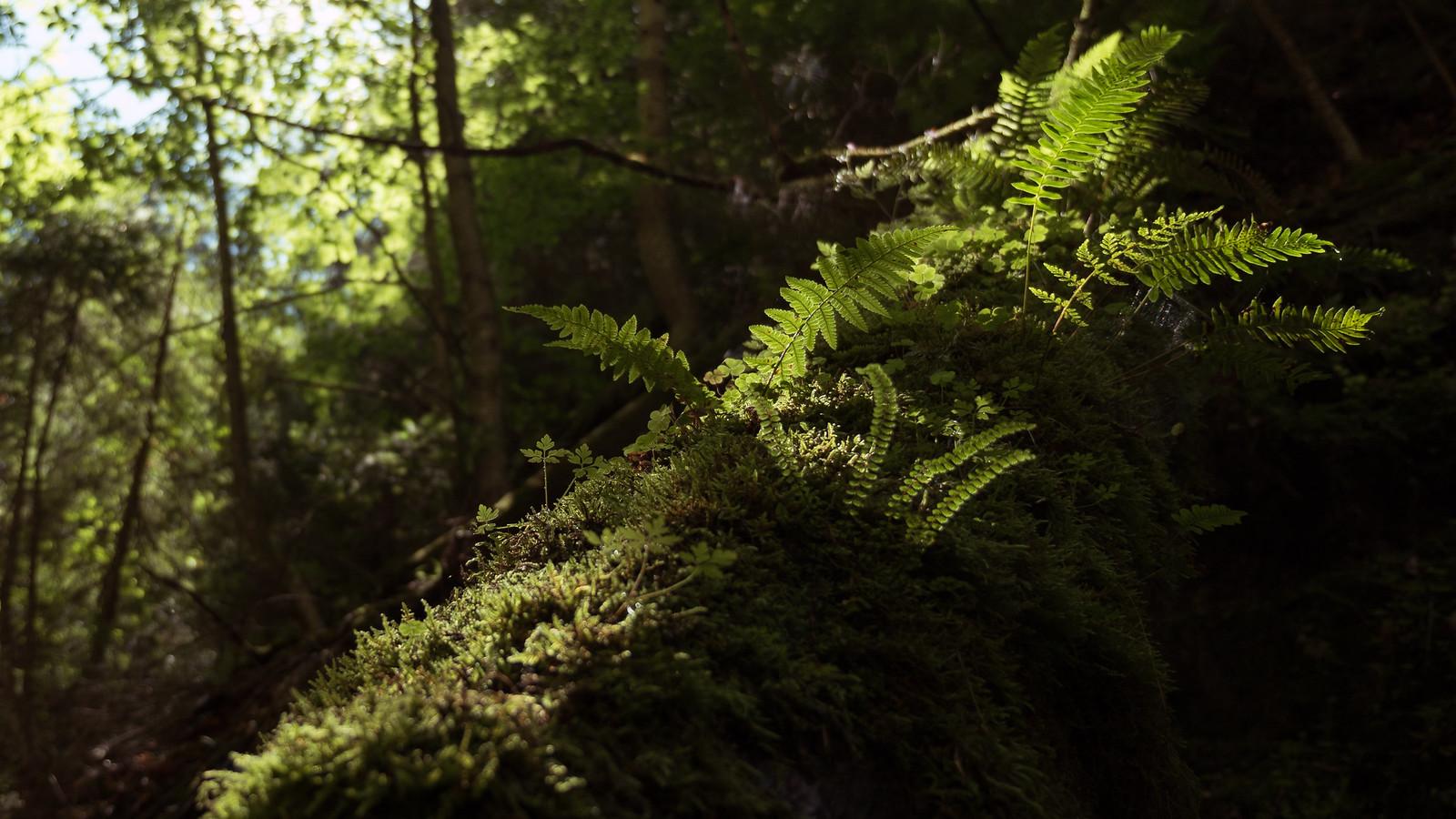 Upea vihertävä luonto Suchá Belán railossa
