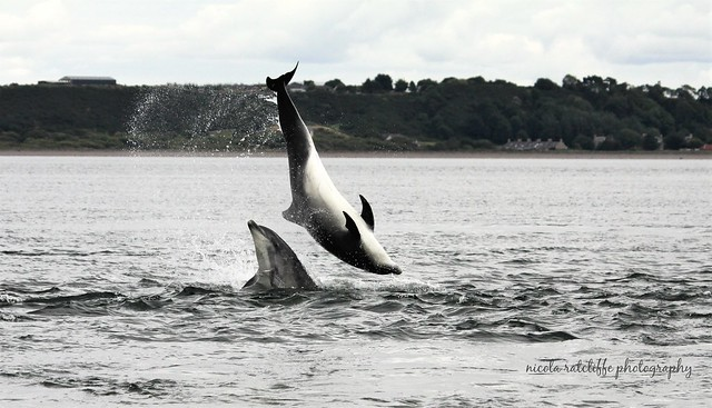 Wild and free bottlenose dolphins