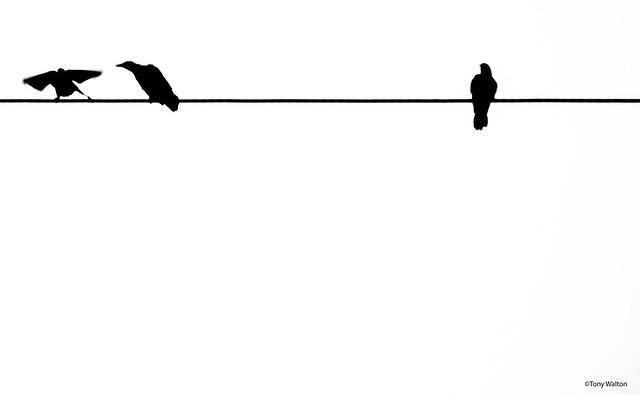 birds on a wire, Nikon D7200, AF-S DX VR Zoom-Nikkor 18-55mm f/3.5-5.6G