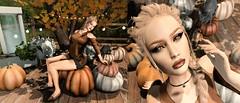 Pumpkins & Cats