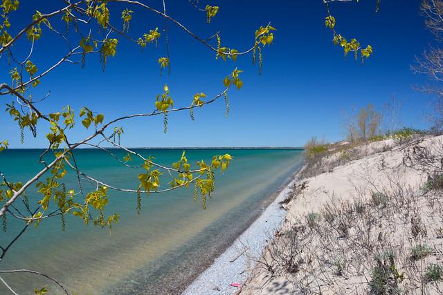 Sandbanks Spring