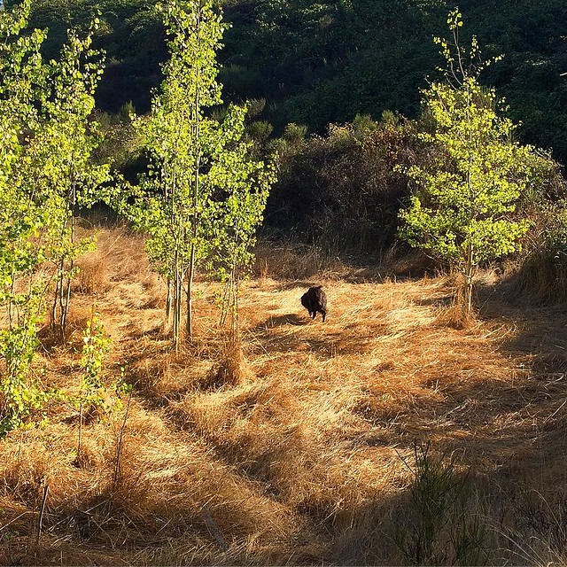 Bear in the rough. 🌾