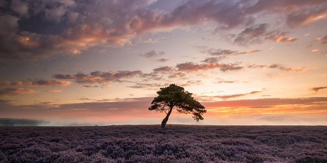 Sunrise on the moors