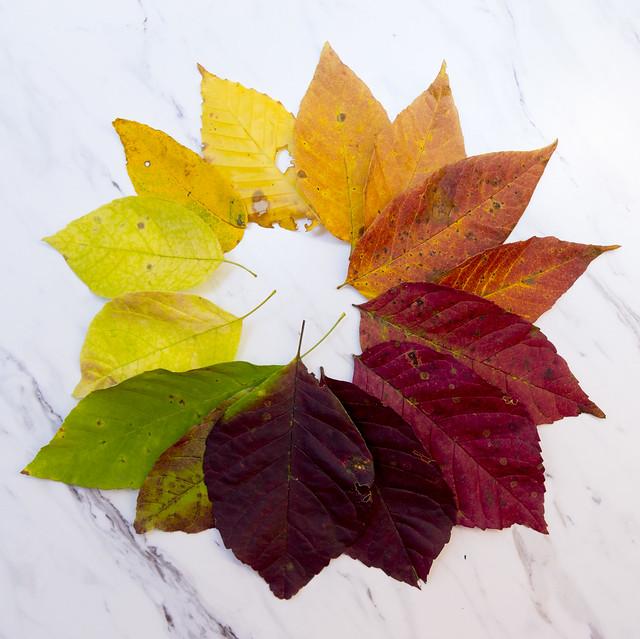 Autumn Circled