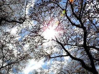泉自然公園 22 桜の天蓋