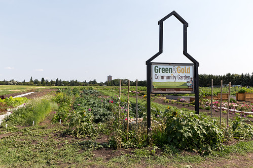 Green & Gold Community Garden Orchard Tour