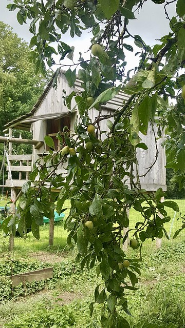 Houten huisje landelijke tuin