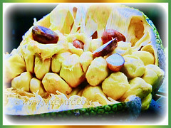 Edible seeds and fruits of Artocarpus integer (Chempedak, Cempedak, Champada, Champekak, Chempedak Utan), 2 Sept 2017