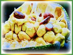 Edible seeds and fruits of Artocarpus integer (Chempedak, Cempedak, Champada, Champekak, Chempedak Utan), 2 Sept 2017
