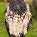 International Birds of Prey Centre (5)