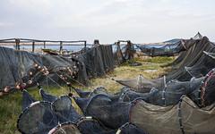 Fishing nets in Mèze