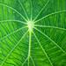 Green patterns by Mabelín Santos