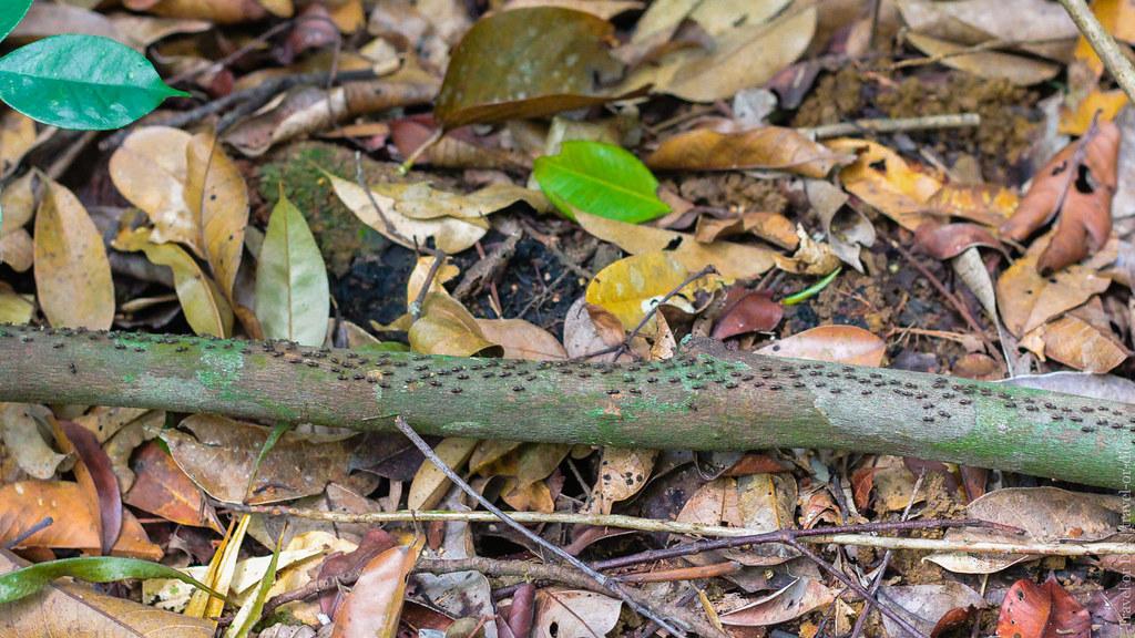 23.06-Sinharaja-Sri-Lanka-canon-1500px-038