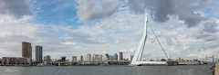 Panorama of the Erasmus bridge Rotterdam