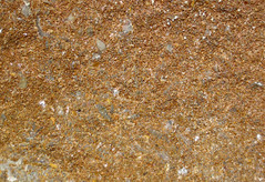 Oolitic ironstone (Brassfield Formation, Lower Silurian; Ohio Brush Creek roadcut, southern Ohio, USA) 6