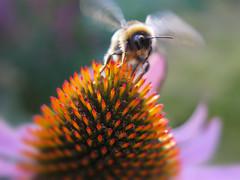 I'll bee moving along ... :-))