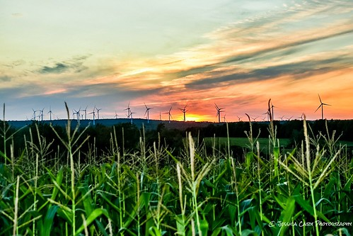 confield cornfield sunset north northcountry amateurphotography amateurphotogrpahy farmlife rural windmills adirondacks