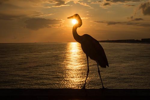 ocean silhouette sunset florida crane